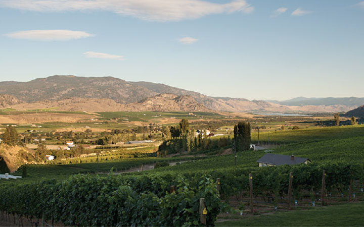 Winery-image17