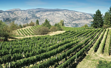 Winery-image22