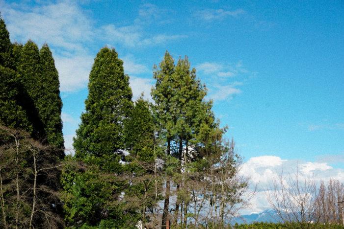Lynn Canyon Parkで自然を満喫!|特派員まゆのバンクーバー日記