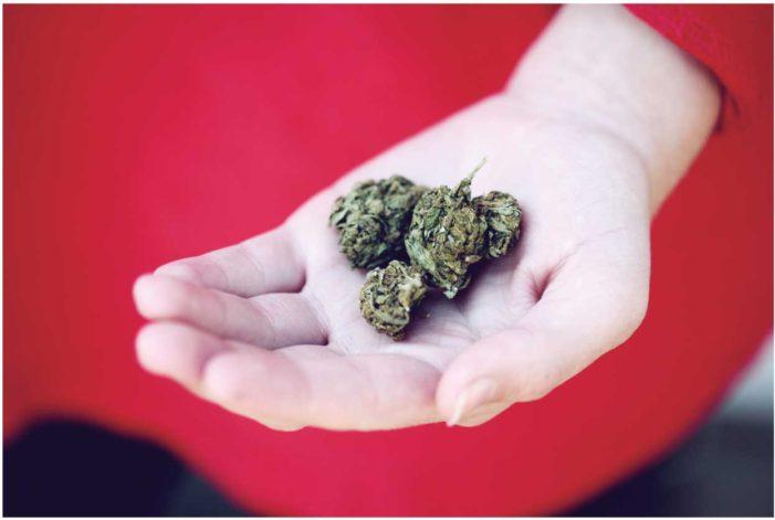 大麻のいま|カナダから見るマリファナ合法化のあと