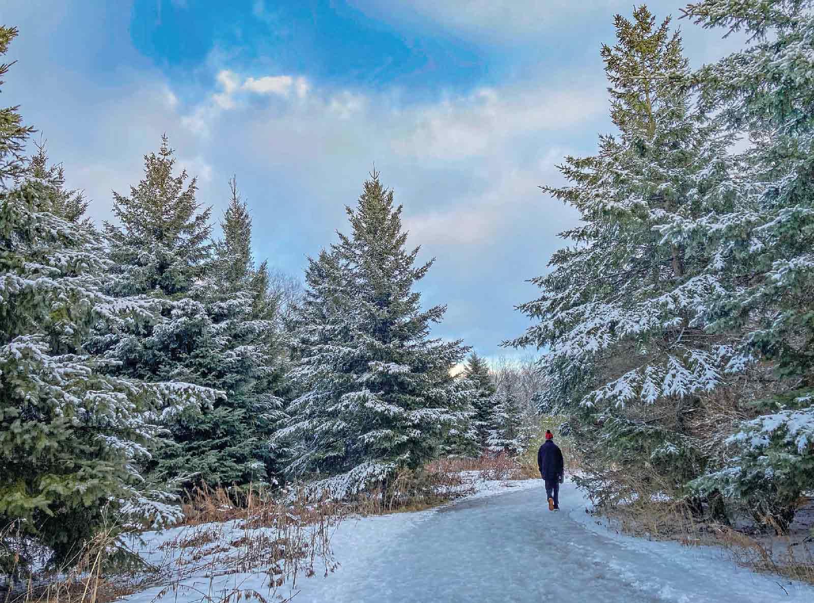 高く伸びたトウヒ(Spruce)林を抜けるトレイル