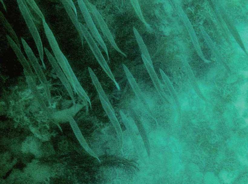 カマスのような魚の群れが海面近くに見える