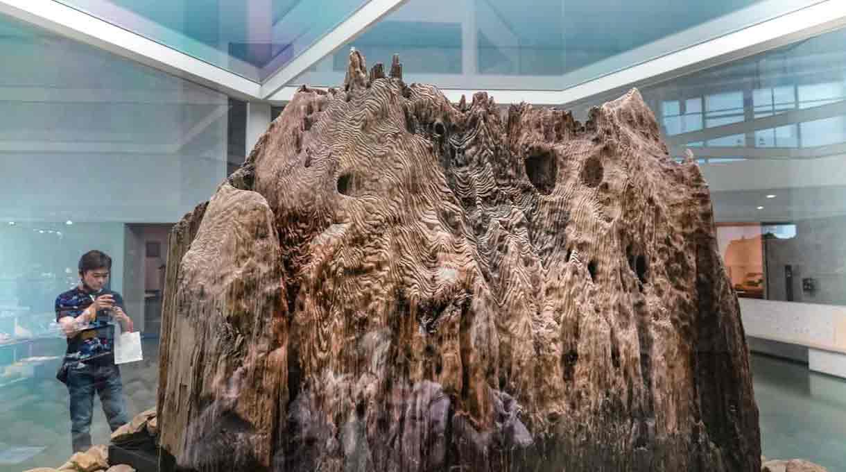 出雲大社境内遺跡から発掘された旧神殿の宇豆柱の一部