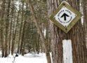 カナダの森を歩いてみよう  BRUCE TRAIL|CANADA発 近鉄ツアープランナーのここだけの話 その98