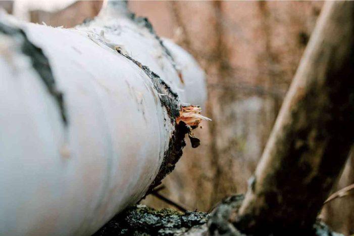 先住民地域の土地を奪い壊滅的な自然破壊をもたらす「トランスマウンテン・パイプライン拡張計画」の行方|特集 過去から振り返るカナダ2020「予想と展望」